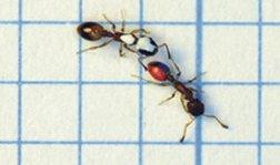 مدرسه مورچه ها