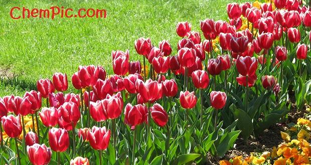 بهارتان مبارک ، بهارتان پیروز ، بهارتان شاد ، بهارتان با عشق باد